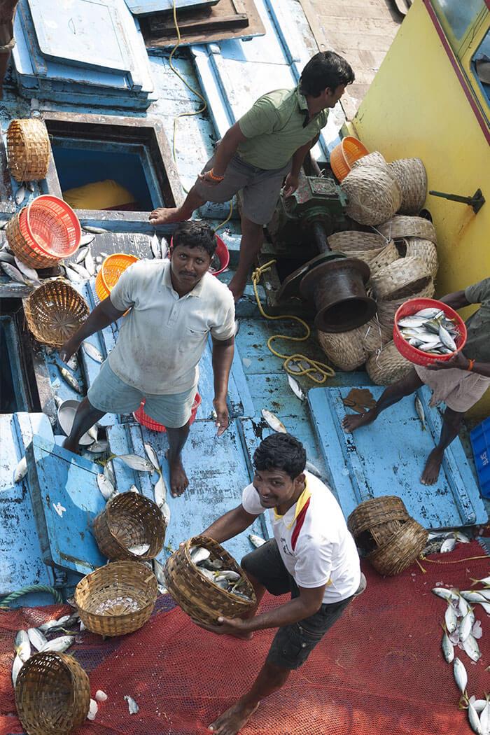 Fish market Mumbai Sasson Docks