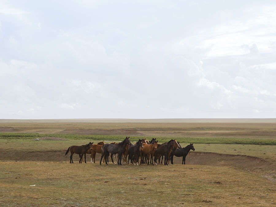 reportage Asia Centrale - branco di cavalli presso il lago Son Kul