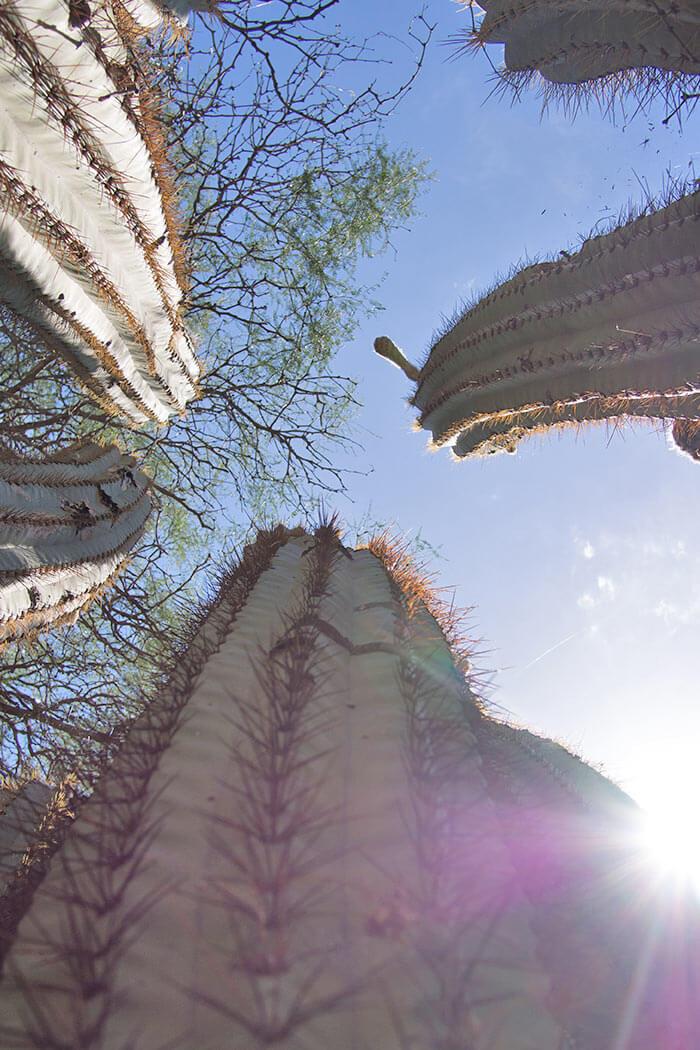 cactus nel Parco di Talampaya Argentina